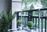 简约风格阳台植物设计效果图