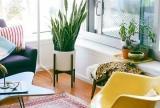 室内植物绿色客厅有氧植物装饰?#35745;?#25928;果图