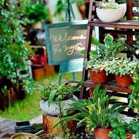露臺花園廢紙容器變身美麗花園角效果圖