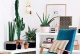 室内植物绿色角落植物景观效果图