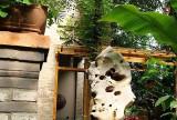 """中式入户花园绿色花园装修效果图阳光中的一片""""绿海"""