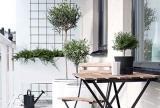 室內植物綠色清新陽臺植物圖片效果圖