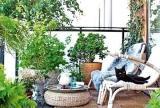 绿色室内植物清新阳台装修效果图欣赏