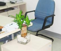 簡約最新辦公室綠色植物效果圖