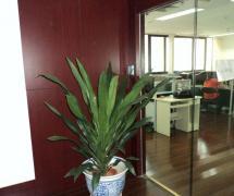 門口辦公室綠色植物效果圖