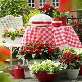花园阳台花园庭院餐桌摆设图效果图